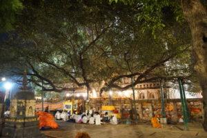 Arbre de la Boddhi de nuit